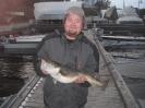 Pen Oslofjord torsk på 3 kg Catch and release