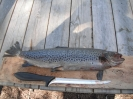 fiskebilder sommer 2012_2