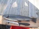 fiskebilder sommer 2012_1